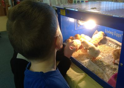 watching-chickens-hatch